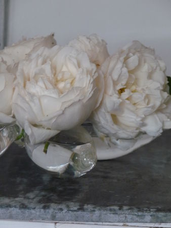 roses_anglaise_001
