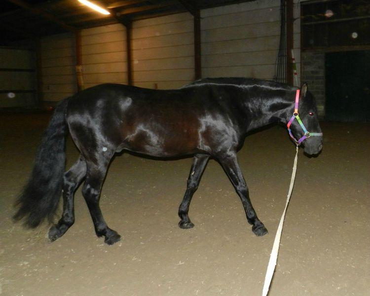 Curtero 2011 23 décembre 5