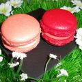 Macaron à la rose et macaron aux fraises Tagada