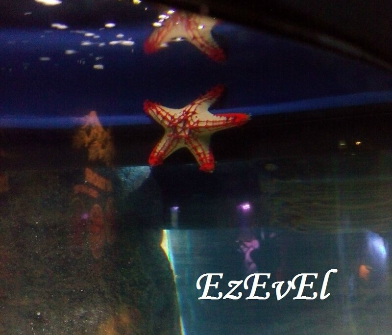 EzEvEl sea life stars 4