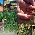 Extrait de faune forézienne