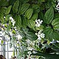 Plante tropicale jardin botanique
