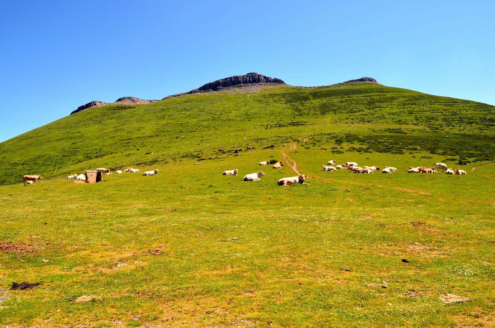 L'oppidum romain d'Urculu...