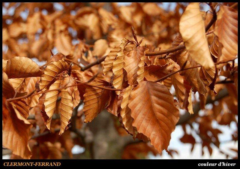CLERMONT - couleur d'hiver