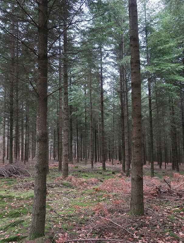 forêt d
