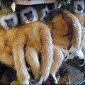 Monkeys à la pelle 2