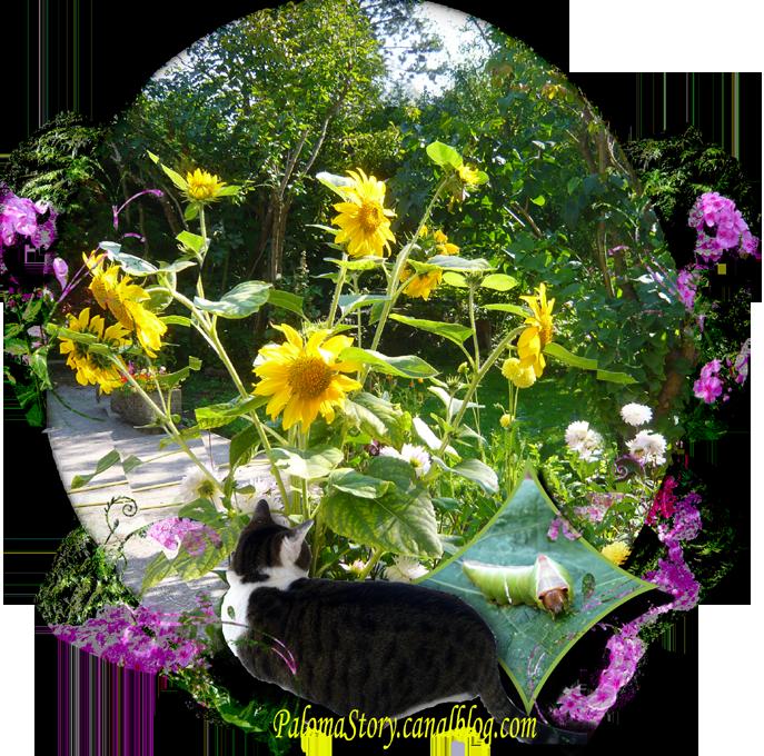 dernières fleurs d'été p3