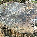 Comment déssoucher un arbre de façon naturelle ?