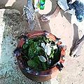 Rituel de purification contre les mauvais esprits du medium lokossi