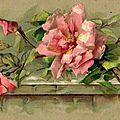 belles roses 4