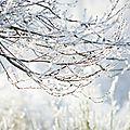 arbre-givre-15-05