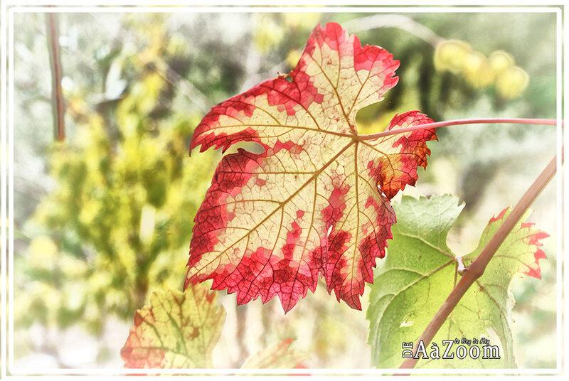 DeAaZoom_automne