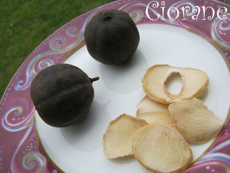 citron-ail-iran