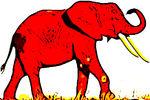 elefantmh01