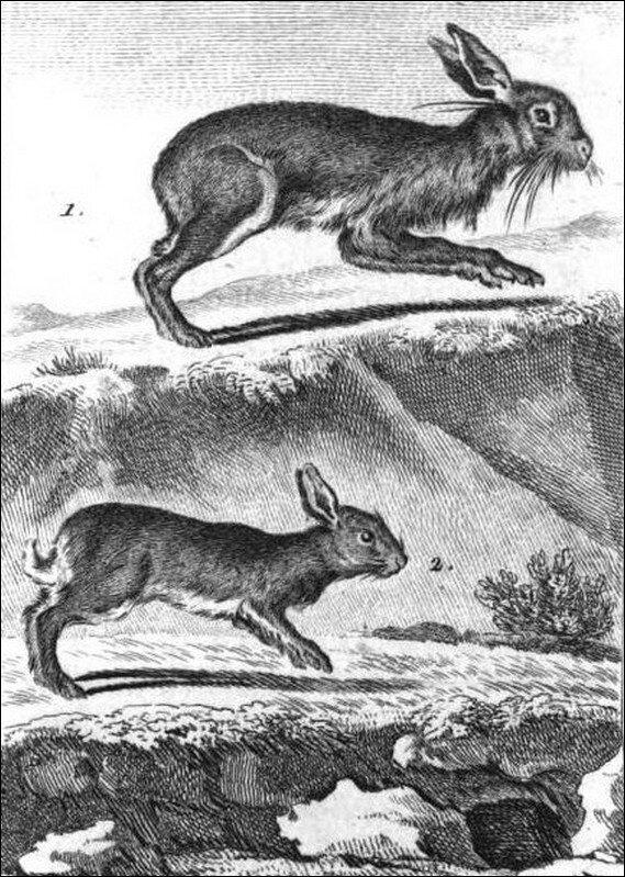 Le Lièvre et le Lapin
