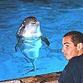 Josephine le dauphin vedette du « grand ble u »