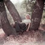 1953-09-02-LA-Laurel_Canyon-Tree_Sitting-042-1