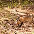 2014-05-30 LUX-1080