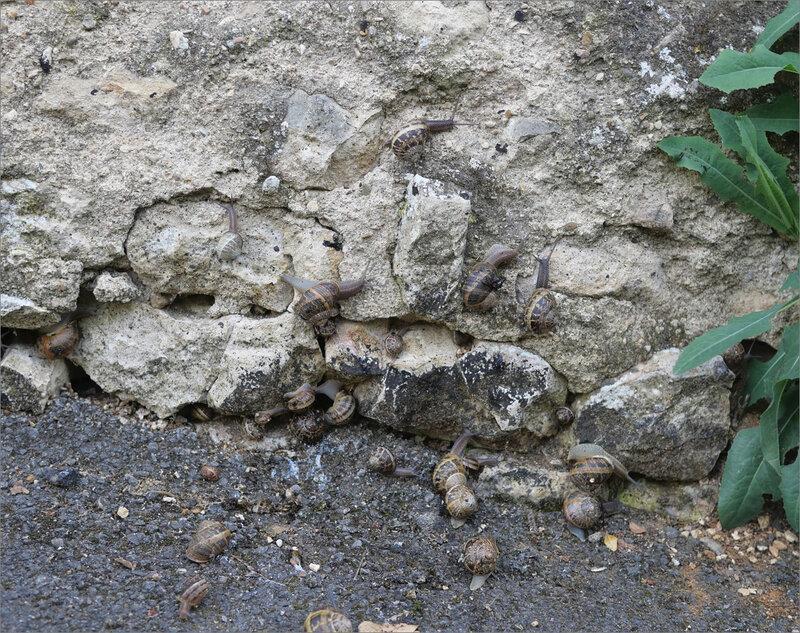 escargots exilés 4 070520