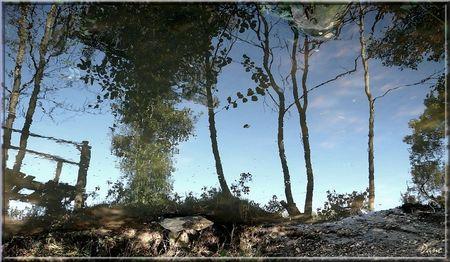 1_eau_reflets
