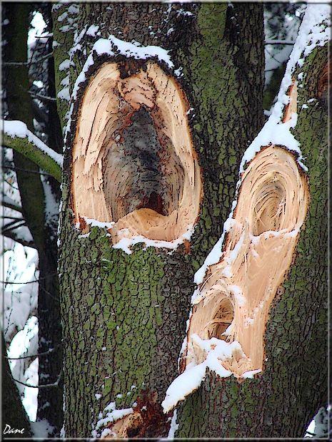 1_arbre_blessure