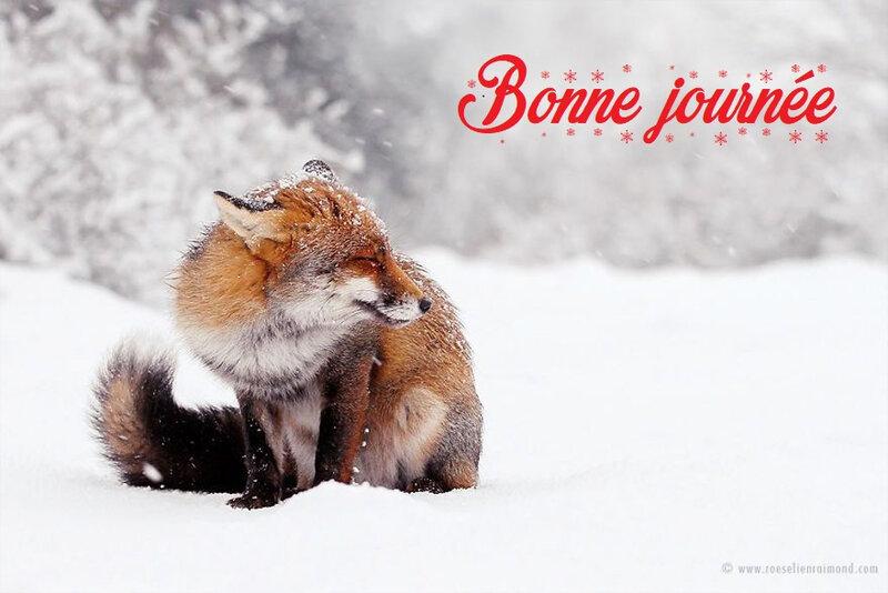 une-photographe-capture-de-magnifiques-renards-sauvages-qui-profitent-de-la-neige-73521-full