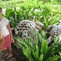 Maureen et les tortues de l'entreé