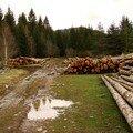 2008 04 08 Des arbres coupé le long d'un chemin