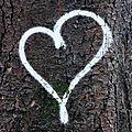 coeur, arbre_5744