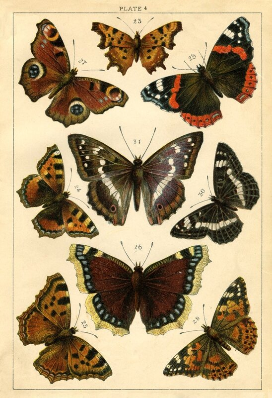 Butterflies_old_Image_Graphics_Fairy2sm
