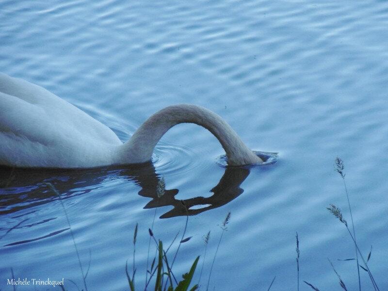 1-Lac Boulogne sur Gesse et St Blancard 010619