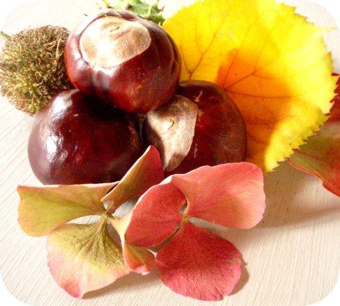 couleurs_d_automne