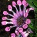 tn_jardin-16-juin-o7-036-1ere-au-hit