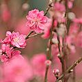 Le printemps en médecine traditionnelle chinoise