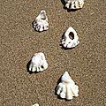 Traces d'huîtres