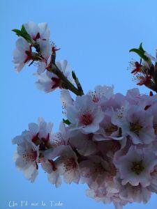 printemps_1
