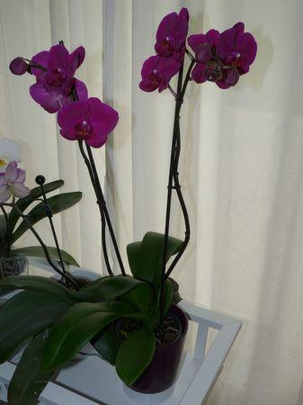 2013-06-09 - orchidée offerte par Séb & Aurélie pour mes 40 ans