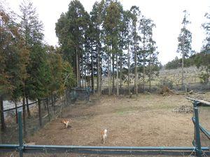 2013日本クリステル 056