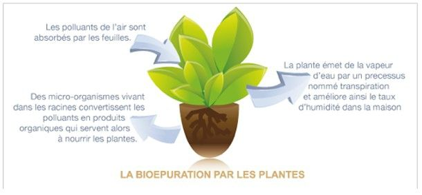 naturo plantes depo