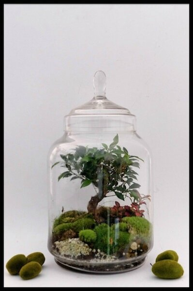 green factory jungle jar