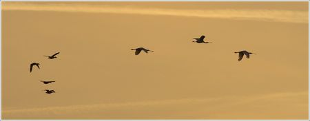 spatules_canards_contrejour_ciel_orange_soir_MS_280708
