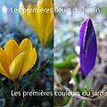 Premières couleurs du jardin