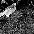 Dead bird and other things...