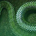 Puissant rituel du serpent-de medium marabout voyant tchedi