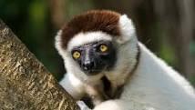Création du blog séjour Madagascar