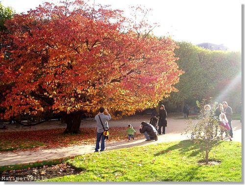 automne, jardin des plantes