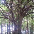 L'arbre intérieur