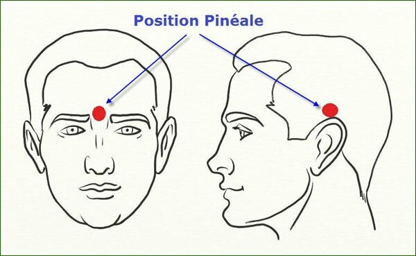 SP201_position-glande-pineale
