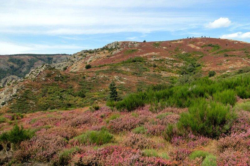 Biotope Mont Caroux 02