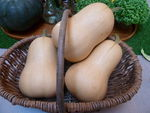courges_butternut__5_